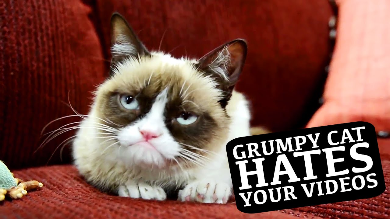 grumpy cat does not - photo #24