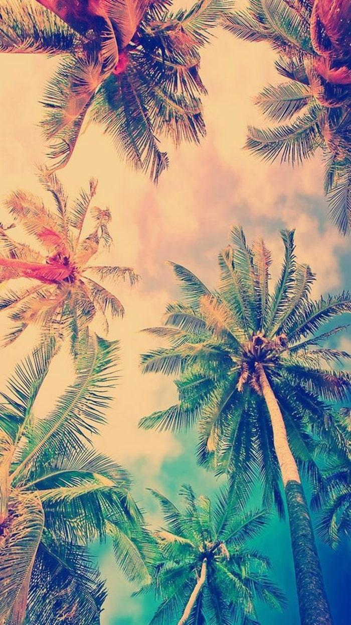 Wallpaper, sfondi iPhone, palme, cielo