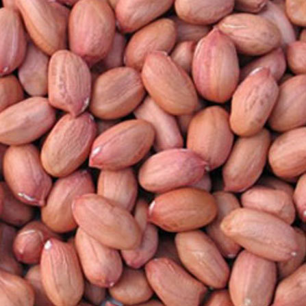 10 Health Benefits of Groundnuts