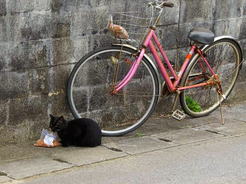black cat eating by bicycle
