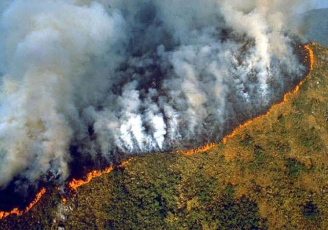 Membakar Hutan untuk Menciptakan Hujan