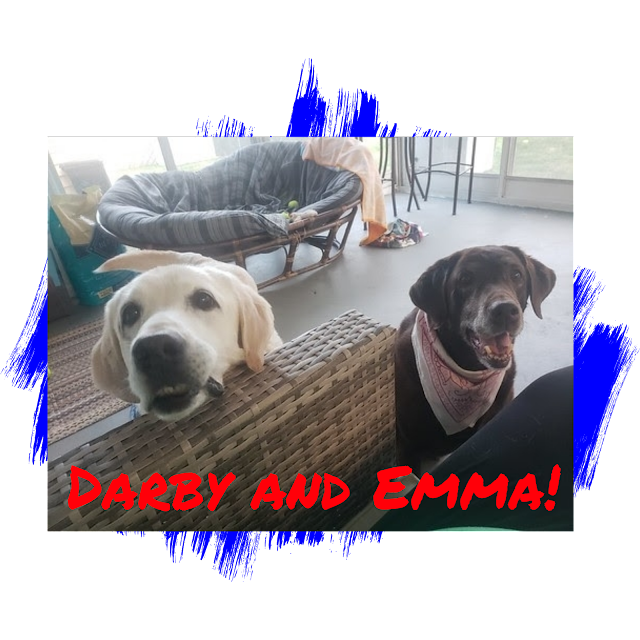 Labrador Retriever Dog Adoption