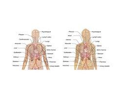 Permalink ke Sistem Organ Badan Insan Dan Fungsinya