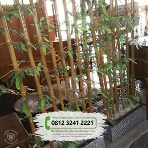 Jual Bibit Pohon Bambu Hias
