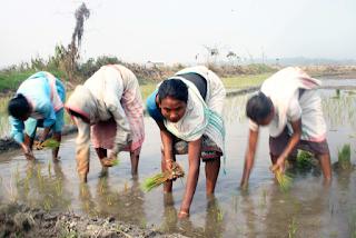 Pola Pertanian Baru Dengan Korporasi