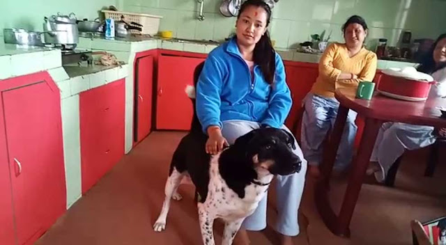Dog saved its owner from a leopard attack in Darjeeling