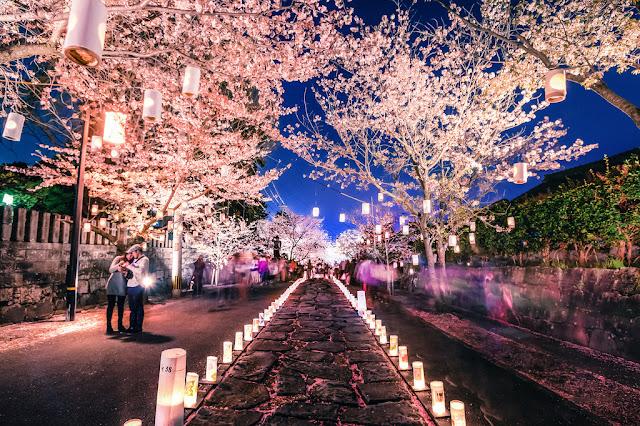 melihat sakura di malam hari