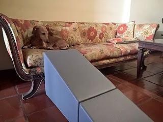 rampas para cães subir em sofás