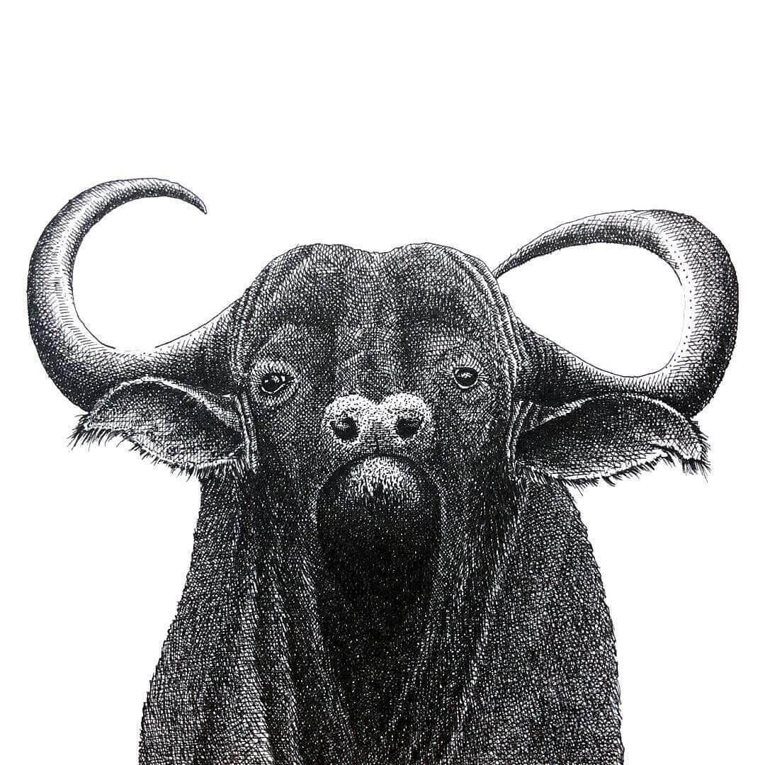13-Water-Buffalo-Gaspar-Animal-Stippling-and-Cross-Hatching-B&W-Drawings-www-designstack-co