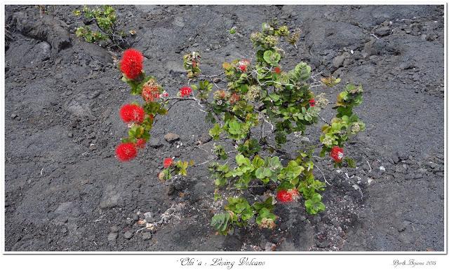 'Ohi'a: Living Volcano