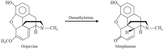 oripavine and morphinone