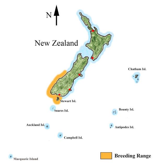 紐西蘭- 企鵝歸巢 Oamaru看藍企鵝,黃眼企鵝