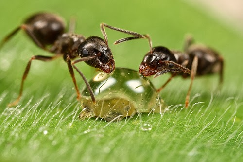 ما لا تعرفه عن عالم النمل