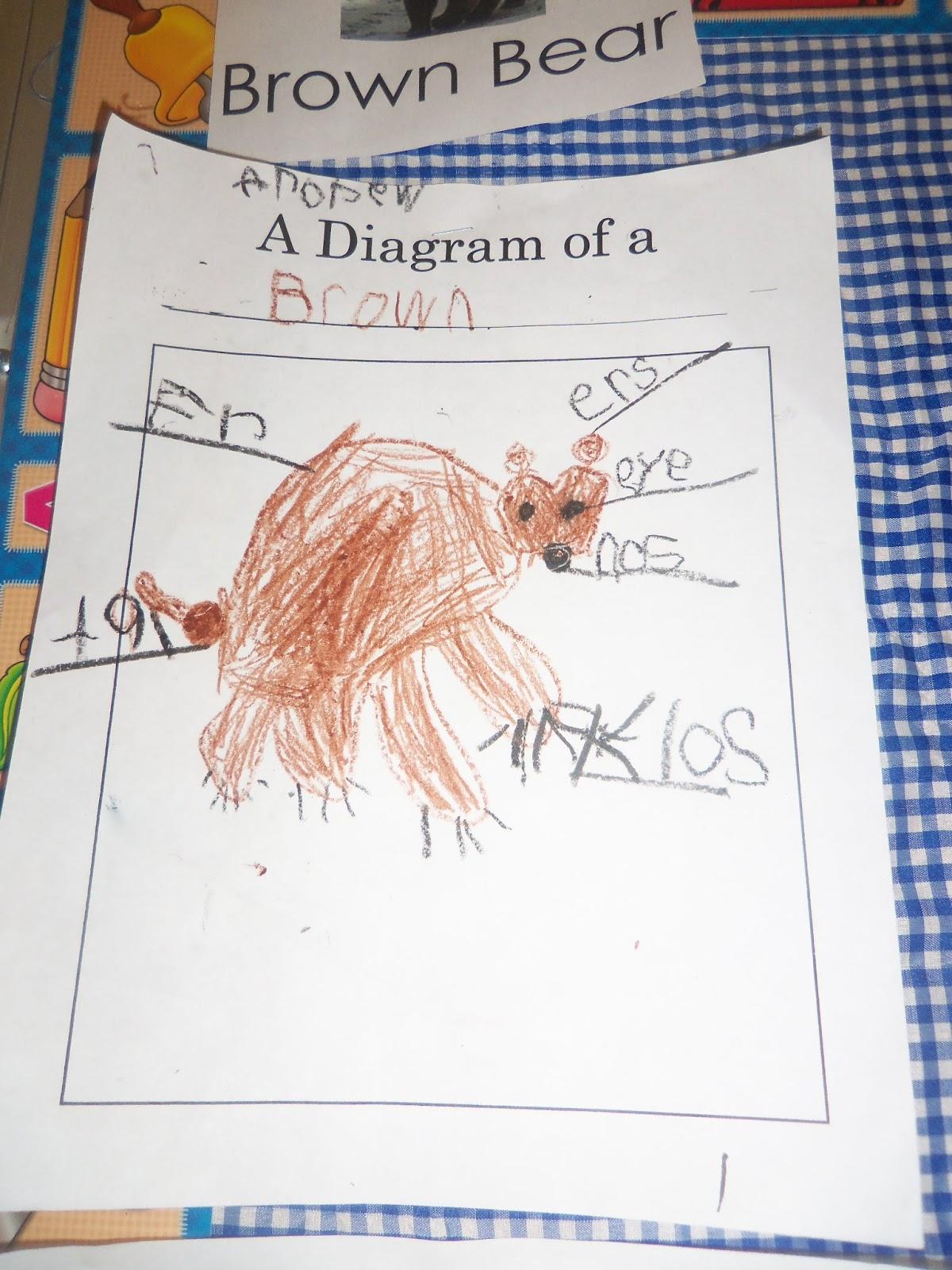Mrs Wood S Kindergarten Class Animals In Winter Research