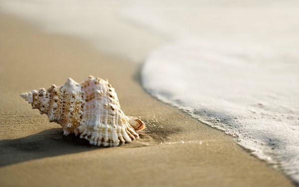 صدفية على الشاطئ