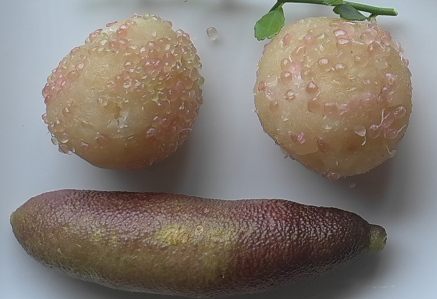 how to use finger lime