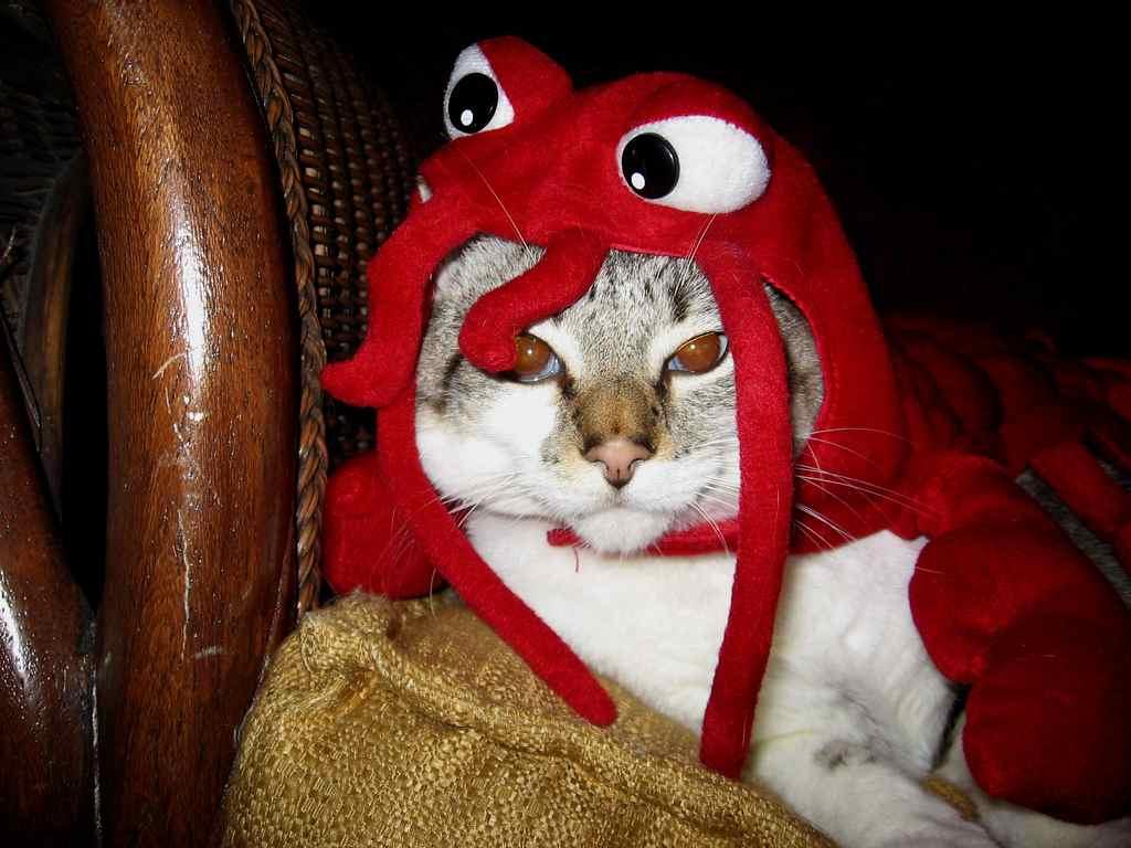 Resultado de imagen de gato y pulpo