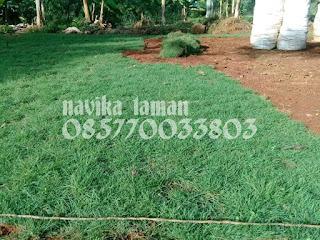 Tukang Rumput Taman Dan Tukang Taman