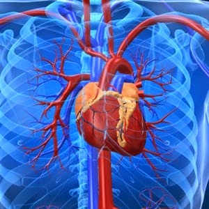 Obat Jantung Bengkak Herbal Terbaik