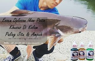 Essen Ikan Patin Khusus Di Kolam
