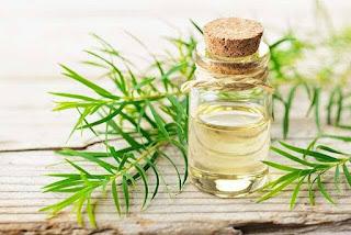 oil for hair growth and hair fall is Tea tree oil