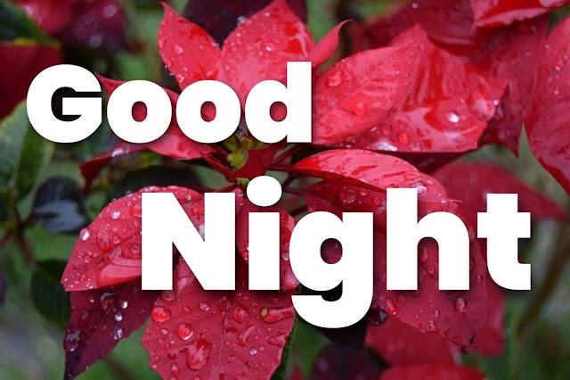 sweet good night flower images