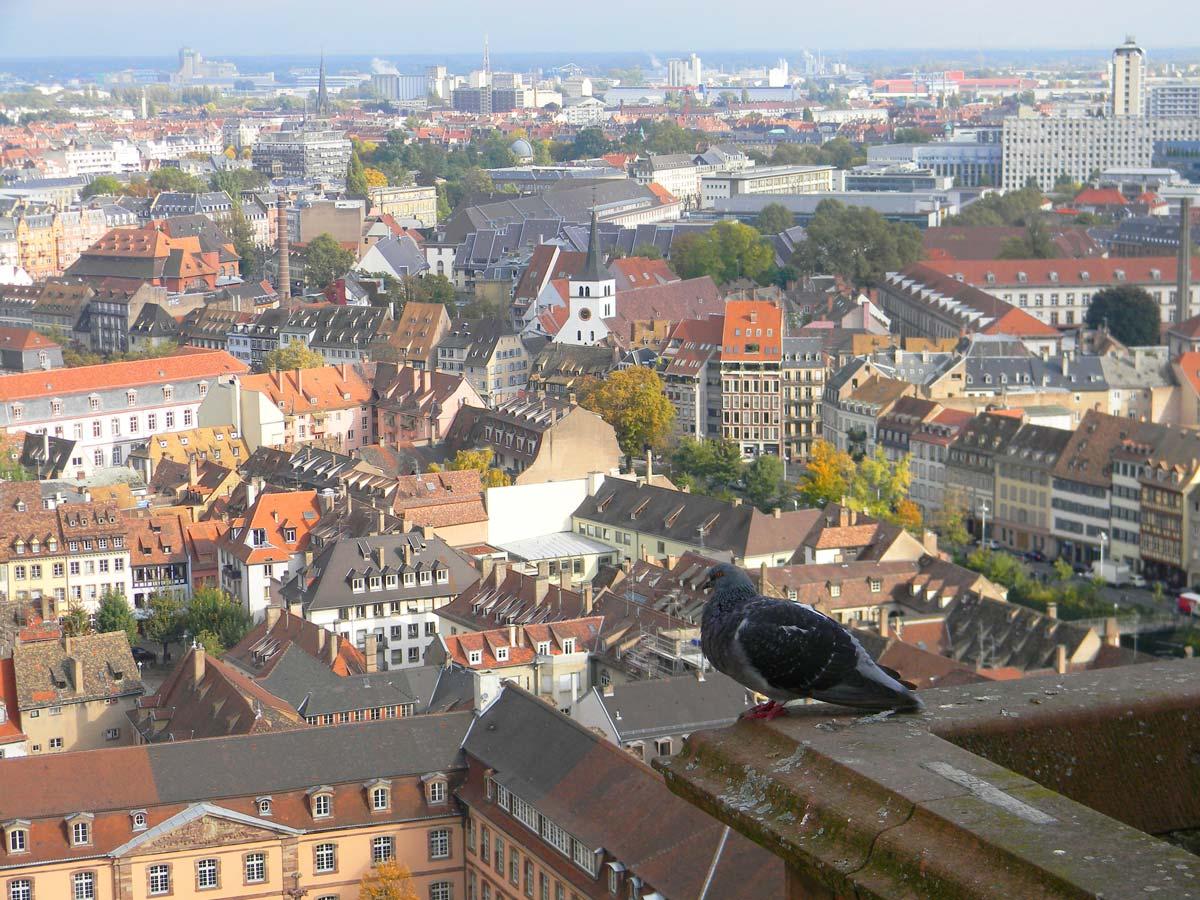 Vue de la Cathédrale Notre-Dame de Strasbourg, automne