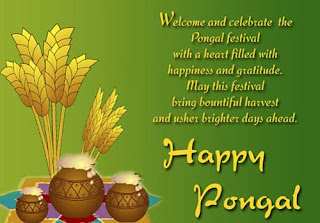 pongal celebration images