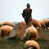 Çobanlık, bahçıvanlık yapmak