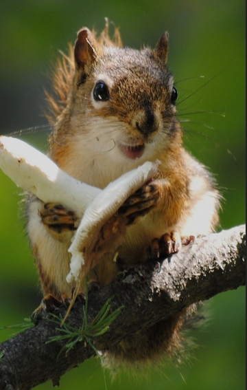 To Survive The Winter Months Squirrels Stash Pinecones Tree Nuts Fruits And Berries That They Can Eat Later These Clever Creatures Also Mushrooms