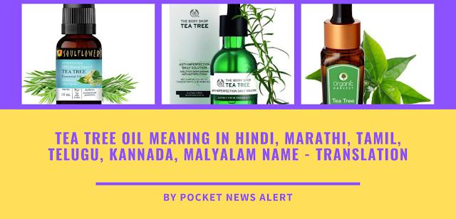 Tea tree oil meaning in hindi, marathi, tamil, telugu, kannada, malyalam name - translation