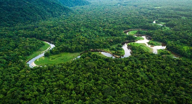 Destruction of the Amazon forests in Brazil jumps to the highest level in 12 years