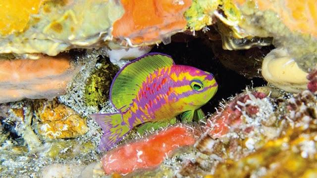 Επιστήμονες ανακάλυψαν ένα νέο είδος εκθαμβωτικού ψαριού