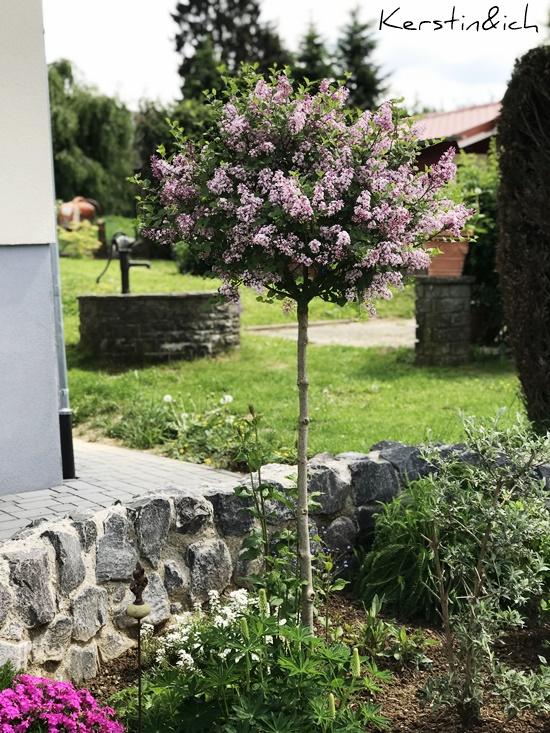 Baum Flieder