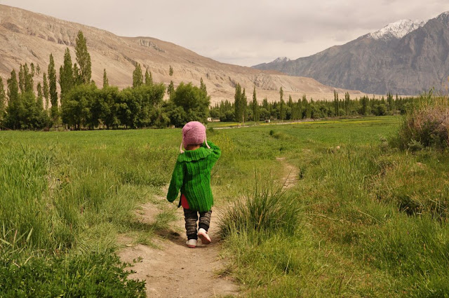 This tiny package of happiness and energy was roaming in the fields in Turtuk, Nubra Valley.