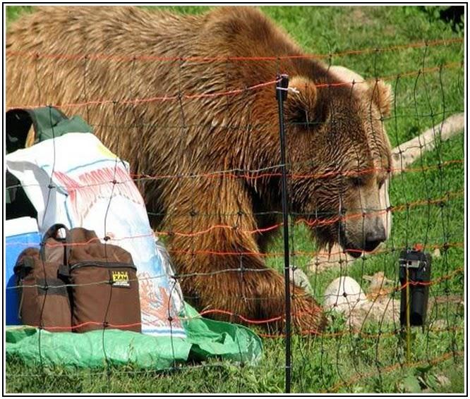 Predator Friendly Ranching Dead Bears And Honey Bees