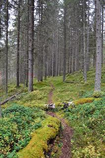Luontopolku, kiemurteleva reitti puiden välissä