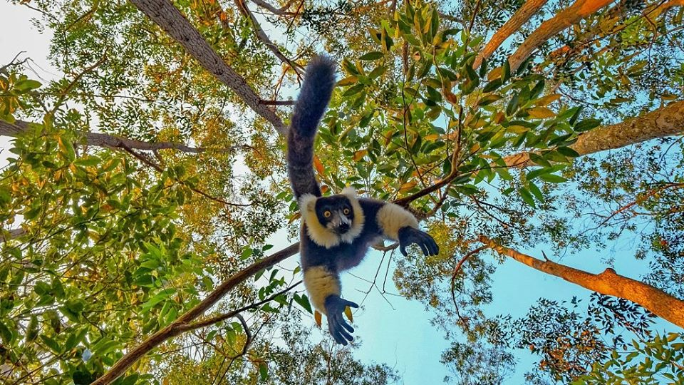 Photographer Shares Hilarious Moment Of Lemur Trying to Steal Camera From His Hands