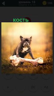 собака держит кость больших размеров на земле