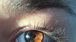 Tại sao mắt nâu không được lãng mạn hóa không giống như các màu mắt khác?