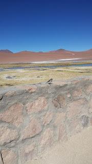 Vegas de Quepiaco Atacama Salar