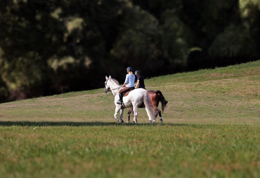 Choosing the right horse riding school