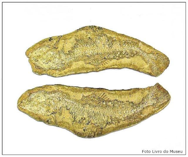 Museu de Aparecida, Fóssil de peixe com 110 milhões de anos
