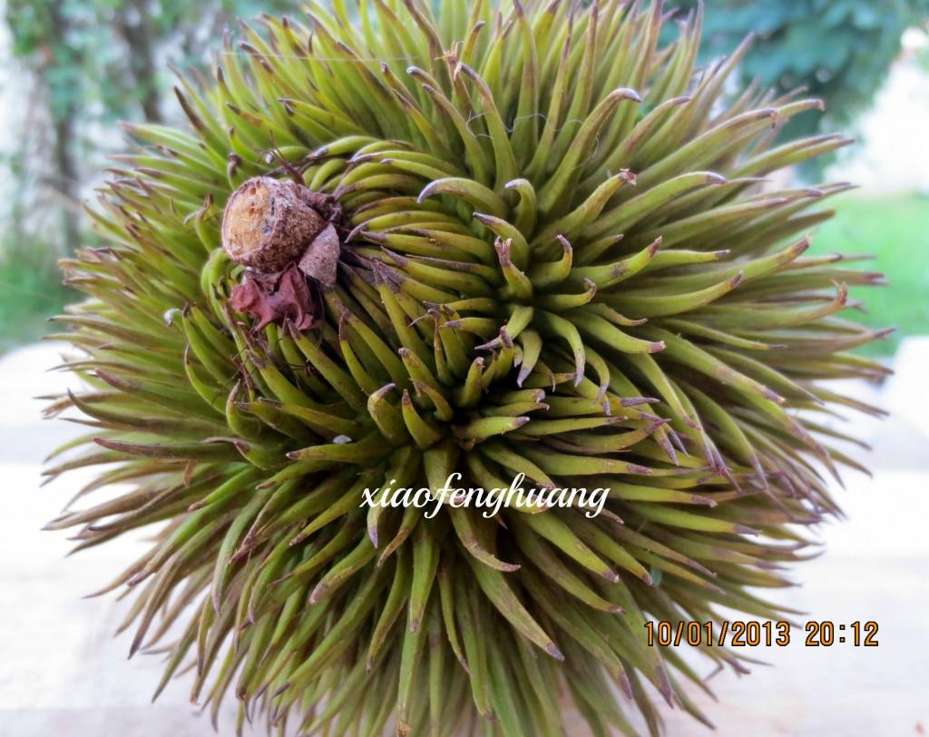 how to get to sarawak malaysia