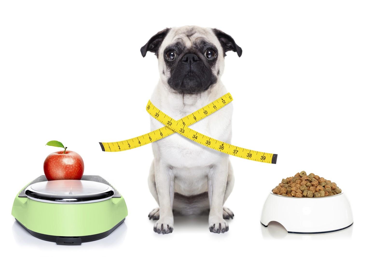 Resultado de imagem para cães obesos