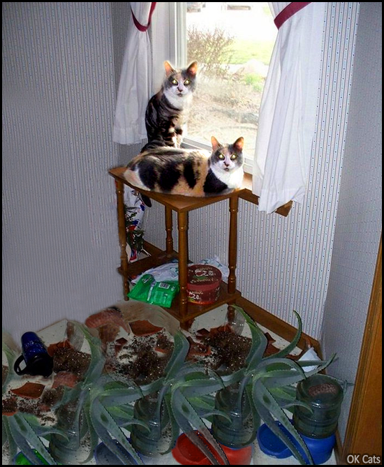 Photoshopped Cat picture • 2 cats destroyed houseplants. 'WHAT, we're innocent...' [ok-cats.com]