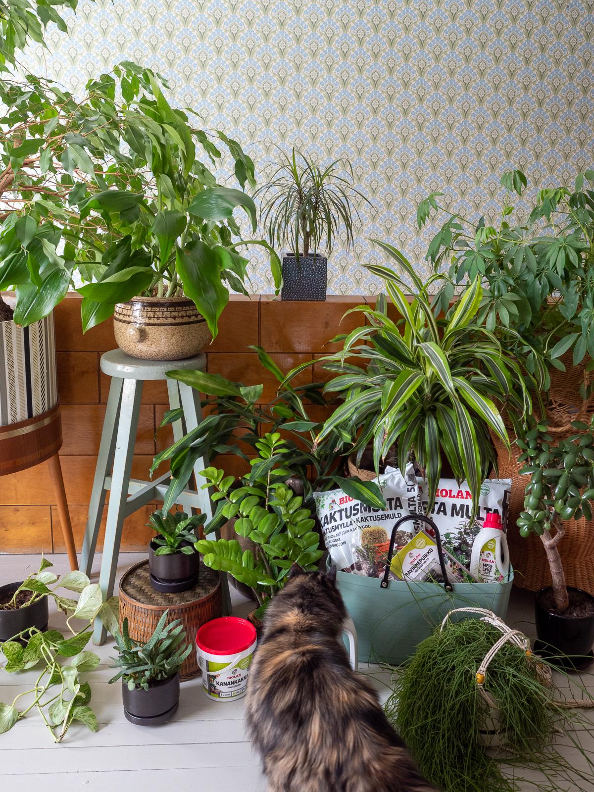 viherkasvien lannoitus milloin ja miten