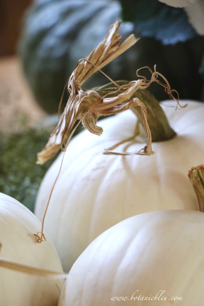 fall-white-pumpkins-twisted-stems
