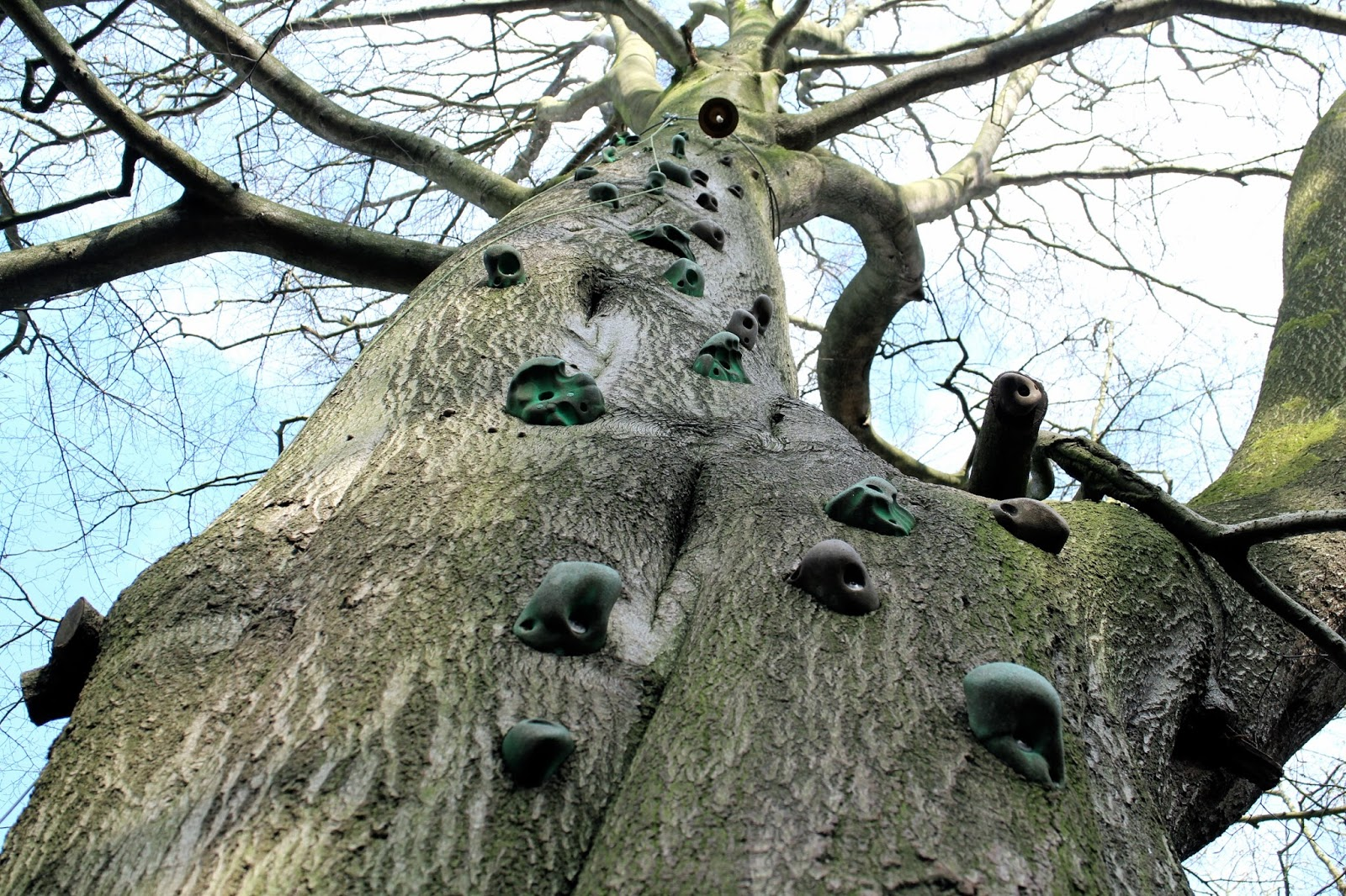 Handmade climbing routes on a tree in Yorkshire, with a bell at the top