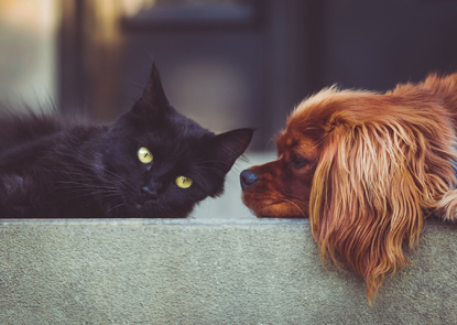 black cat and brown dog lying on a sofa together